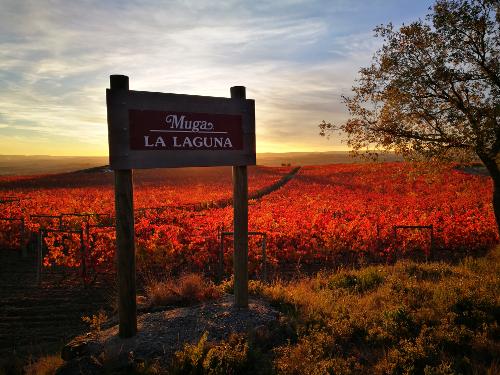 1.viñedos-muga-laguna