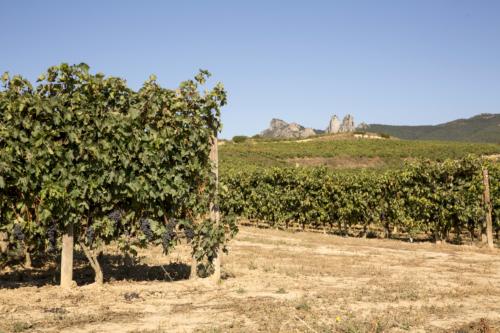 16.parras-uvas