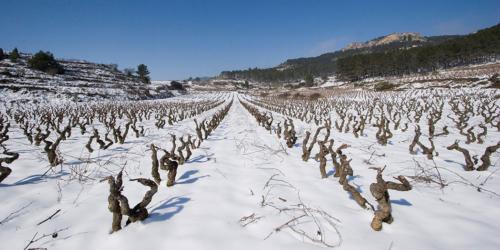2.viñedos-nevados