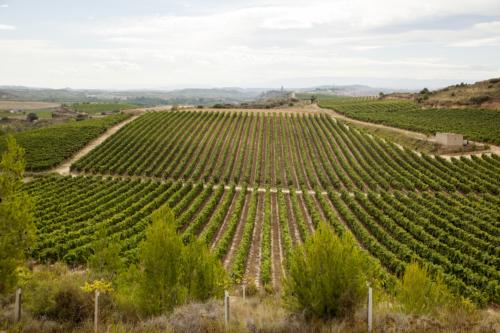21.viñas-panoramica