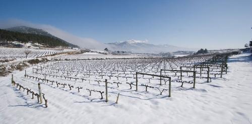 7.viñedo-nevado