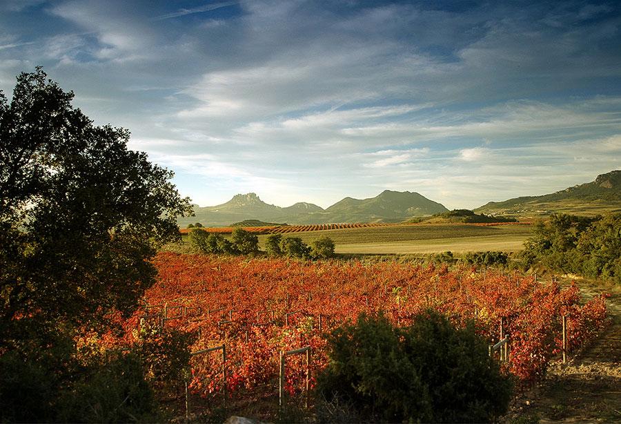 Visit the vineyards