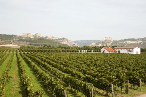 22.viña-panoramica-muga