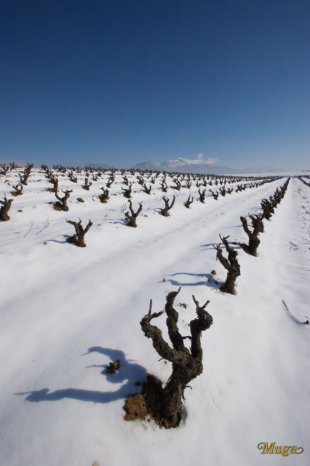 High altitude vineyards have cold winters