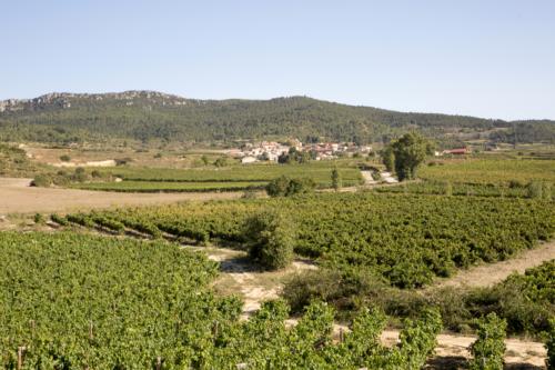 17.viñedo-panoramico