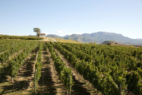 20.viñas-muga