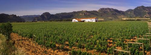 4.muga-viñedos