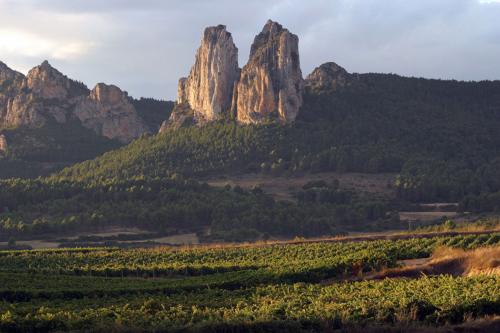 8.muga-viñedo