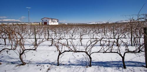 9.viñas-nevadas
